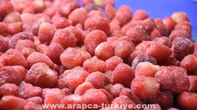 ملاطية التركية تصدر 20 ألف طن من الفراولة المجمدة